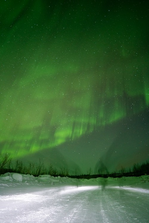 Northern lights on display above a snowy trail