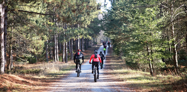 A group of fat bike cyclists riding on a tree lined dirt road